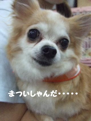 2008_08260013.jpg