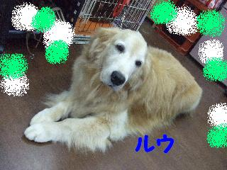 2008_08260077.jpg