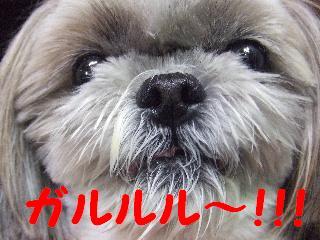 2008_08260088.jpg