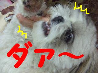 2008_08300024.jpg