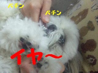 2008_08300025.jpg