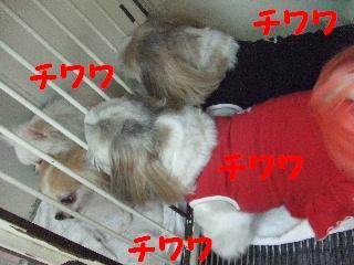 2008_09020027.jpg