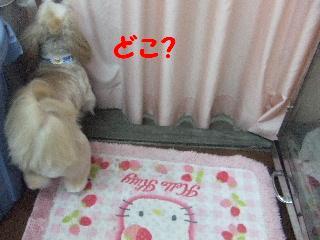 2008_09060031.jpg