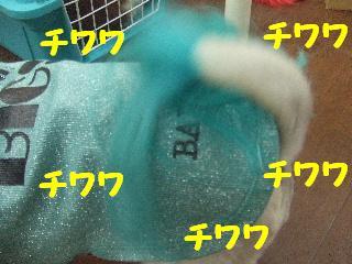 2008_09130005.jpg