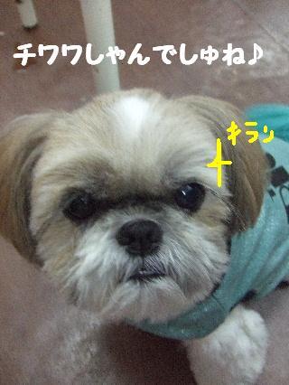 2008_09130007.jpg