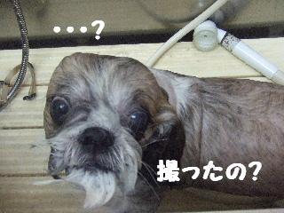 2008_09130038.jpg