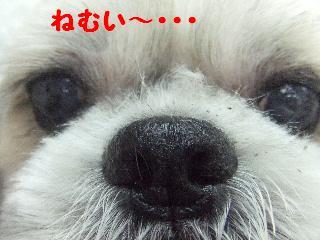 2008_09130046.jpg