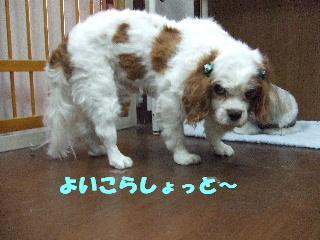 2008_09230021.jpg