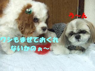 2008_09230023.jpg