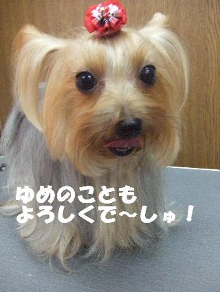 2008_09270019.jpg