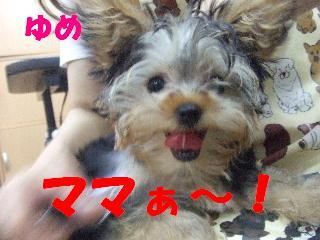 2008_09270024.jpg