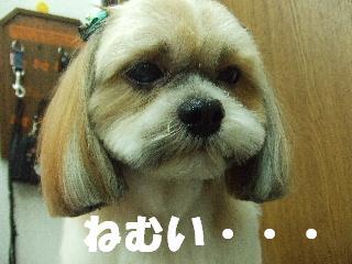 2008_09270046.jpg