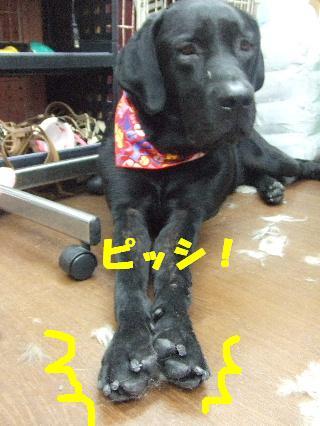 2008_09270048.jpg