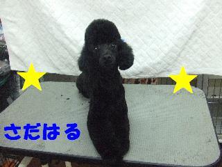 2008_09270055.jpg