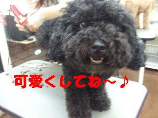 2008_09300004.jpg