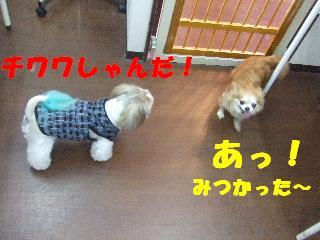 2008_10040009.jpg