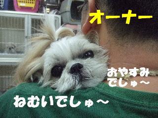 2008_10040019.jpg