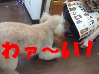 2008_10040041.jpg