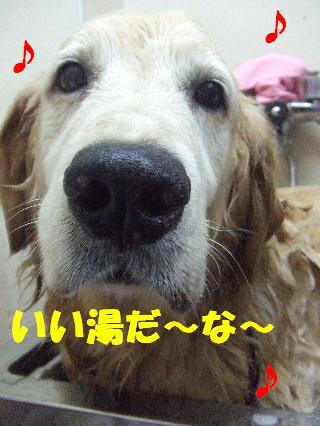2008_10070016.jpg