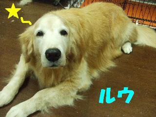 2008_10070048.jpg