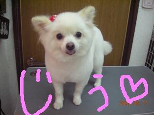 DSCN3078.jpg