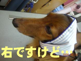 DSCN3199.jpg