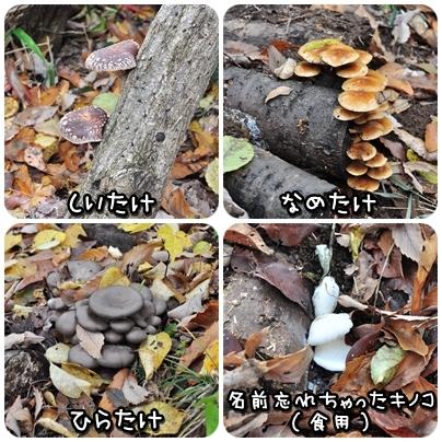2010-11-27_01.jpg