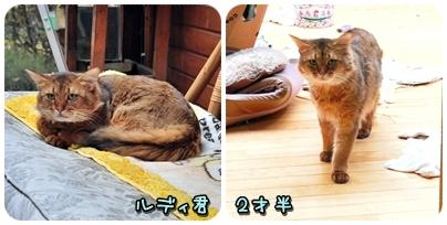 2010-11-27_02.jpg
