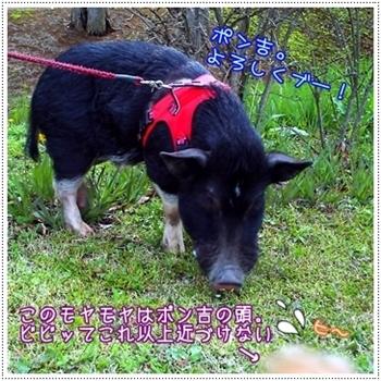 2010_04_13_02.jpg
