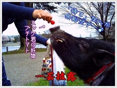 2010_04_13_03.jpg