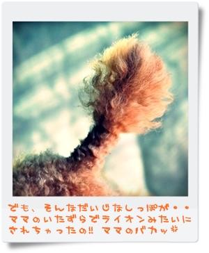 DSC_2056-002.jpg