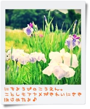 DSC_2657-005.jpg