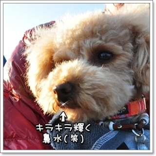 DSC_6060.jpg