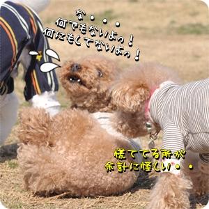DSC_8267-1.jpg