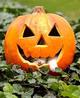 cat_jackolantan.jpg