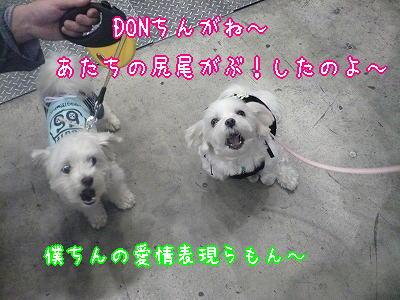 donguri08 114_3