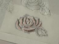 バラの多色刷り 008 blog