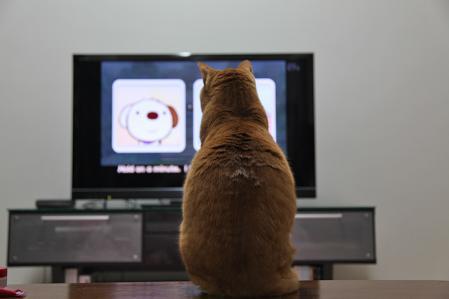TV面白い?