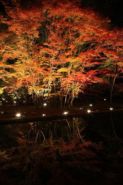 曽木公園 ライトアップの紅葉