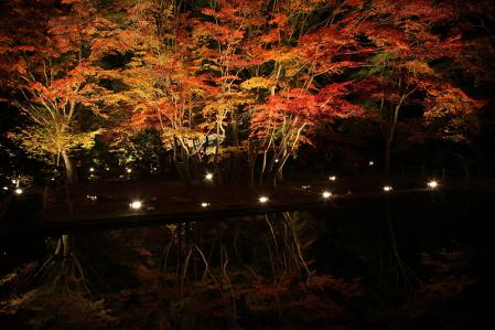 曽木公園 ライトアップされた紅葉が池に写る