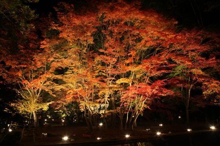 曽木公園 ライトアップされた紅葉