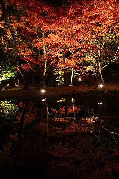 曽木公園 池に写る紅葉その2