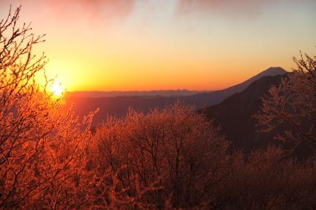 朝焼けに輝く木々