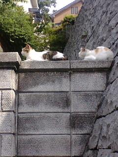 塀の上で並んでお昼寝。