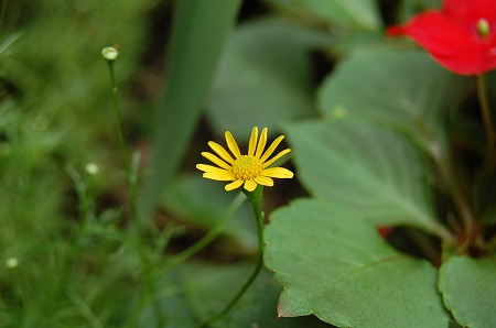 09夏花壇2