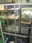両棲・爬虫類コーナー1