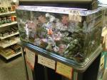 無脊椎動物展示水槽