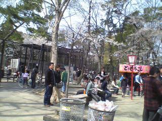 安城公園 花見