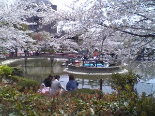 安城公園花見2