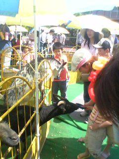 刈谷 移動動物園